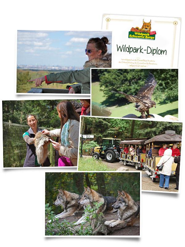 Collage Feiern Tagen Wildpark-Restaurant